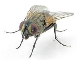 Formula para pegar moscas